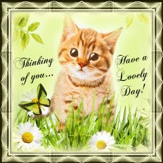 Everyday Cards/Thinking of You section. Send this cute kitten to anyone! Permalink : http://www.123greetings.com/general/thinking_of_you/in_my_thoughts_and.html