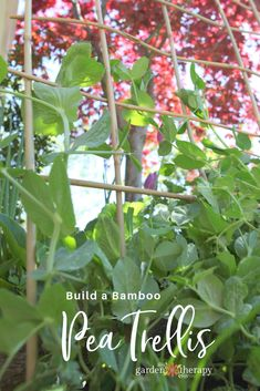How to Build a Woven Bamboo Trellis. Peas, beans, and other vining vegetables need some sort of trellis to support their growth towards the sky. This project shows you how to easily build a bamboo trellis with only one material.  #gardentherapy #gardendiy