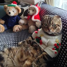 """mostlycatsmostly: """" Merry Xmas everyone! (by d0rach) """""""