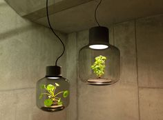 Plant Lamps Designed For Rooms Without Windows | Geekologie