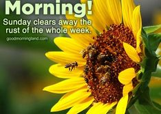 Good Morning Sunday Wishes Images Download - Good Morning Images, Quotes, Wishes, Messages, greetings & eCards Sunday Wishes Images, Good Morning Monday Images, Good Morning Friends Images, Good Morning Happy Sunday, Morning Pictures, Morning Pics, Daily Quotes, I Am Awesome, Inspirational Quotes