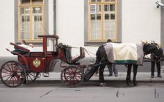 I love enjoying my cup of coffee and piece of cake in Vienna. Here the rundown of my favorite Kaffeehäuser you should not miss when visiting Vienna! Horse Drawn, Piece Of Cakes, Brunettes, Vienna, Baby Strollers, Fashion Beauty, Horses, Nice Asses, Baby Prams