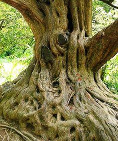 TREES = Rituals & Ceremonies... - Chief Yagbe Awolowo Onilu