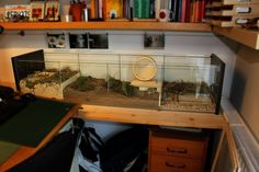 Dwarf hamster cage made from repurposed IKEA Detolf glass display cabinet.  Zwerghamstergehege aus umfunktionierter IKEA Detolf Vitrine.