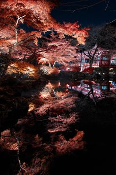 Night Tranquility - Daigoji - Kyoto - Japan