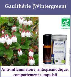 Gaultherie Gaia, Agriculture Biologique, Boutique, Health, Plants, Up, Tattoo, Beauty Secrets, Peppermint