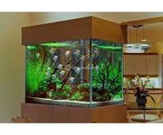 Aquarium Design Group - An Angelfish Live Planted Aquarium and Interior Planted Aquarium, Saltwater Aquarium, Aquarium Fish Tank, Freshwater Aquarium, Nature Aquarium, Wall Aquarium, Aquarium Aquascape, Aquarium Light, Aquarium Landscape