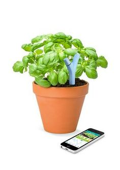Go High Tech and 9 other fun gardening projects for kids!