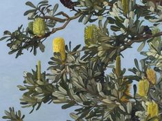 "Judith Sinnamon.""Banksia Integrifolia,"" 2012, oil on linen, 77 x 102 cm."