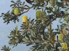 """Judith Sinnamon.""""Banksia Integrifolia,""""  2012, oil on linen, 77 x 102 cm."""