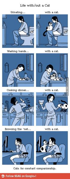 Life with/out a cat #lovemycat