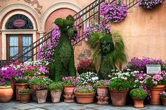 terracotta pot, gardens, topiaries, dog, disney, container gardening, ladi, tramp, flower
