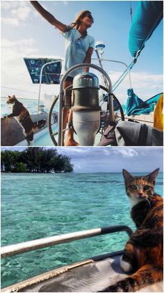 With her kitty Amelia the Tropicat by her side, Capt. Clark has been manning her trusty 40-foot sailboat alone for the past decade.