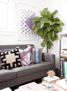 FLIP AND STYLE || Sydney Fashion and Beauty Blog: The Fiddle Leaf