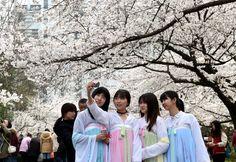 Photos : Cerisiers en fleurs dans l'est de la Chine Capitole Aktuell Daily Infos @Osvaldo_Villar @Magisterwines