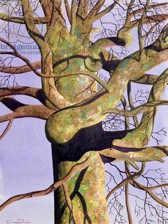 Manifold, 1997, Simon Palmer Look at those amazing lichen greens in bark!