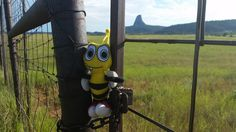 Close encounter... Buzz at the Devil's Tower!  #DevilsTower #Wyoming #travel #cute #mascot #USA #WildWest #west