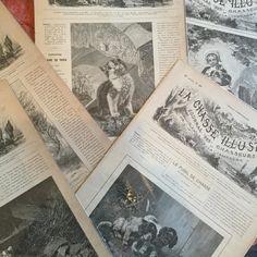狩猟の新聞  狩猟に興味はありませんが 美しい動物達のイラストに惹かれます 19世紀の印刷の素晴らしさにも感激です  #papier #journaldeschasseurs #19emesiecle #france #animale #紙もの #紙ものマニア #19世紀の新聞 #狩猟 #狩猟新聞 #フランス #gallery壹 #galleryichi #フランスアンティーク