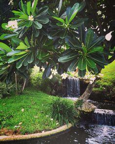 Magical setting at the Four Seasons Jimbaran in Bali  Bali Indonesia  -#travel #travelling #TheTravelExplorer #Indonesia #beautiful #worldtour #igers #picture #amazing #instatravel #instapassport #beautifuldestinations #trip #vacation #instagood #island #hotel #Asia #flowers #waterfall #jimbaran #bali #nature #thebaliguideline #thebalibible #TheBaliGuru by thetravelexplorer