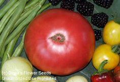 Tomato 'Fred Limbaugh's Potato Top' tomato seeds
