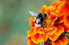 Studie legt nahe: Auch Bienen haben Emotionen und Stimmungen  . . . http://www.grenzwissenschaft-aktuell.de/studie-bienen-haben-emotionen20160930