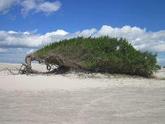 Praia de preá em Jericoacoara - Ceará #voali