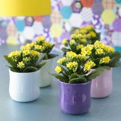 Czy znacie inną, równie ładną i kwitnacą, mało wymagającą roślinę jak kalanchoe? Ma szeroką gamę kształtow kwiatów i kolorów.  Nie straszna jest jej krótka pamięć właściciela...  Jaką byście polecili roślinę kwitnącą dla początkującego ogrodnika i miłośnika roślin?