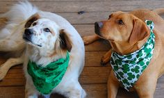 St. Paddy's Day Doggies