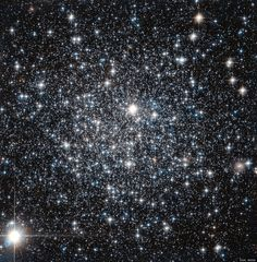 This new NASA/ESA Hubble Space Telescope image shows the globular cluster IC Globular clusters are big balls of old stars that orbit around their host galaxy. Cosmos, Sistema Solar, To Infinity And Beyond, Globular Cluster, Hubble Images, Hubble Photos, Hubble Space Telescope, Telescope Images, Star Cluster