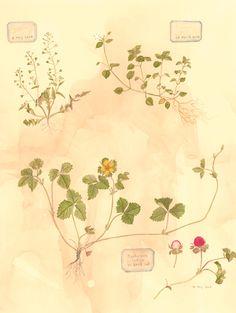 sketch  野の花えほんのためのスケッチ