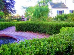 I adore boxwood. It's elegant, evergreen, and -- when established -- drought-tolerant. But you can have a formal Buxus hedge without breaking the bank.