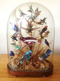 antique bird cloche #vintage #birddisplay #decor