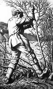 more on the history of hedgelaying