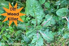 DIY Weed Killer What You Need: 1/2 gallon of Apple Cider Vinegar 1/4 c table salt 1/2 tsp Dawn liquid dish soap What You Do: Mix all the ingredients together and pour into a spray bottle. Then just spray weeds thoroughly.