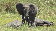 Kruger National Park, National Parks, Mud Bath, Biggest Elephant, Baby Elephant, Elephants, Life, Animals, Elephant Baby