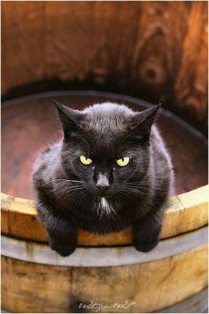 ✿❤✿ Black Cat ✿❤✿