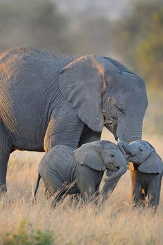 A mother and 2 babies. God, please keep them safe from poachers so they can have moments like this everyday.