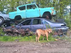 Ford Anglia, Antique Cars, Antiques, Vehicles, Vintage Cars, Antiquities, Antique, Car, Old Stuff