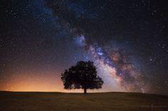 Tree Of Life by Michael Shainblum on 500px