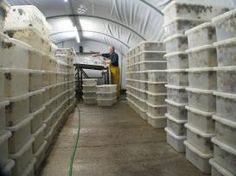 A Dorset worm farmer has ditch his wrigglers in favour of a real gourmet slow food - snails, Mark Donovan meets the man behind Dorset Escargot Cricket Farming, Snail Farming, Fish Farming, Sustainable Farming, Urban Farming, Sustainability, Worm Farm Diy, Worm Beds, Aqua Farm