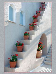 Best tips for how to care geraniums in winter to stay beautiful Geraniums in winter need special care because these flowers come in rest until next spring. Geraniums are spectacular flowers that bl… Outdoor Steps, Indoor Outdoor, Red Geraniums, Potted Geraniums, Potted Plants, Flowering Plants, Corfu Greece, Stair Steps, Stairway To Heaven