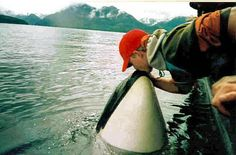 Matt and luna- I know luna is gone now. But I'd love to see really whales in the wild.