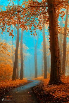 Orange is the old blue by Lars van de Goor - Photo 227079303 / 500px