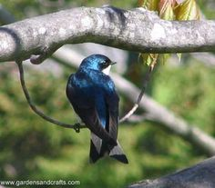 How to attract birds to your landscape