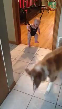 Here are 20 dog gifs that I hope brighten your Wednesday Cute Funny Dogs, Cute Funny Animals, Cute Baby Animals, Cute Cats, Funny Animal Memes, Funny Animal Pictures, Happy Animals, Animals And Pets, Chien Golden Retriever