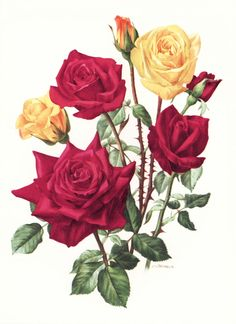 Office Decor Happiness Rose Illustration by ParagonVintagePrints