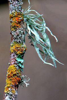 Microcosm. Patterns & Colors . Lichen
