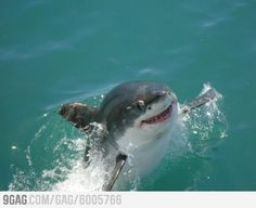 """Ridiculously Photogenic Shark 
