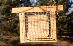 The birds will go crazy for these suet cakes!