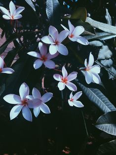 Vintage photography of Hawaiian flowers in the summer. Flowers Nature, Love Flowers, Beautiful Flowers, Winter Flowers, Phone Backgrounds, Wallpaper Backgrounds, Screen Wallpaper, Iphone Wallpapers, Tumblr Wallpaper